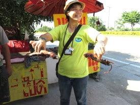 Thailand rats 2
