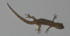 Breaking News from Singapore: Severe Weather and Soggy Geckos