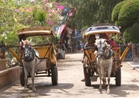 Horse carts on the island of Gili Trawangan, Indonesia
