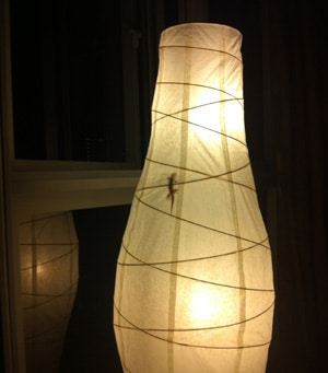gecko lamp
