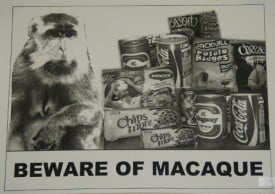 Sign: Beware of Macaque