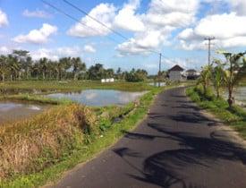 ubud-countryside-copyright-dave-fox-globejotting-dot-com