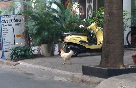 HCM Chicken Emergency 1